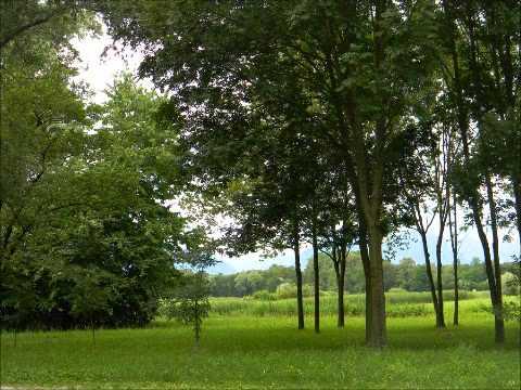 Piet Veerman  Green green grass of home