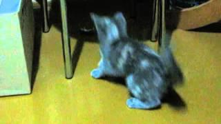 Кошки - мышки  Мышь жестко заплатила за воровство еды