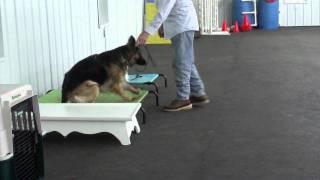 Aldens Kennels Inc. Crystal Lake Il.  Dog Training
