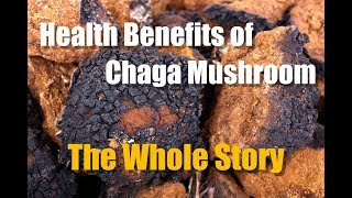 CHAGA MUSHROOM HEALTH BENEFITS - THE WHOLE STORY