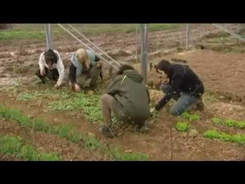 Les Jardins de Cocagne : solidaires par nature - France 3 Limousin - YouTube