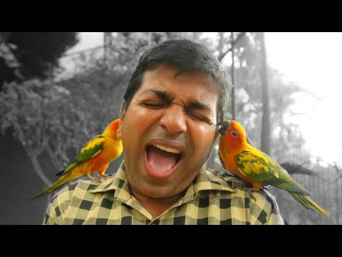 Hand Feeding Sun Conure Birds In Water World Sri Lanka