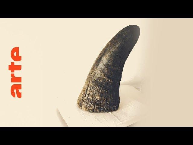 Rhino Dollars: illegale Nashorn-Wilderei | Doku | ARTE