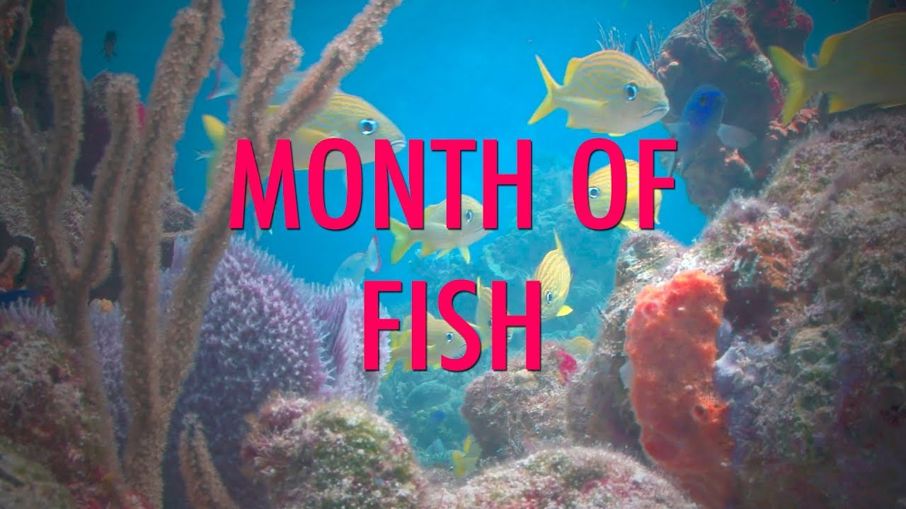 Month of Fish - It's Month of Fish! Enjoy fish.