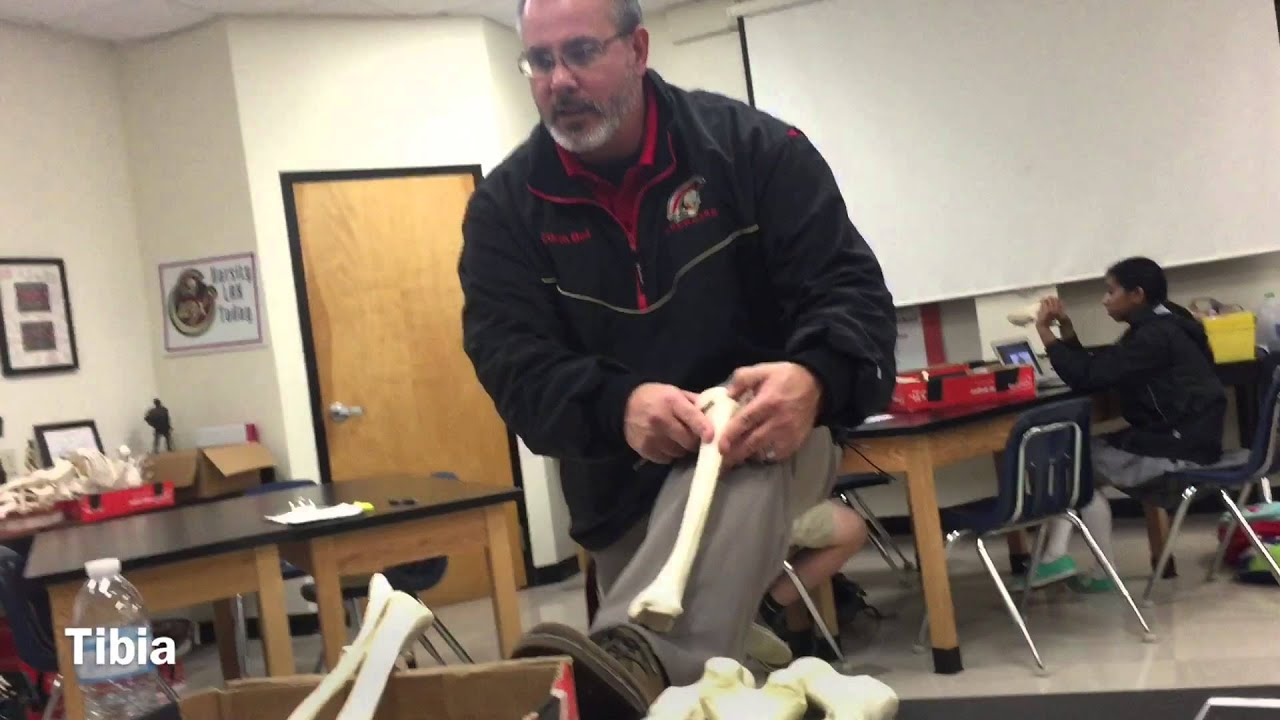 SKELETAL BONE LAB TEST - YouTube
