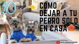 Como dejar a tu perro solo en casaTips by Natalia Ospina