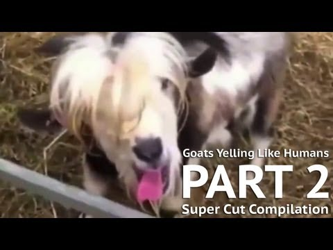 Goats Yelling Like Humans - PART 2 [Super Cut Compilation]