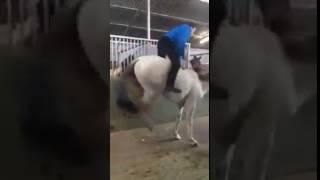 игры с лошадью белая лошадь приколы с лошадьми