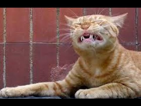 Funny Sneezing Animals HD