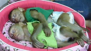 Ohh Look So Sweet!! Baby Dodo And Baby Mori Sleeping At Night, They Are So Adorable