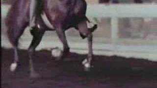 American Saddlebred Horse At The Rack - Slow Motion