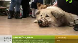 В Салехарде состоялась благотворительная выставка-раздача бездомных животных «Пушистый день»