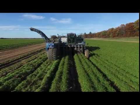 Carrot Harvest 2016