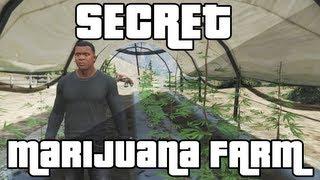 GTA 5 - Secret Marijuana Farm Easter Egg! (Grand Theft Auto 5 Easter Egg)