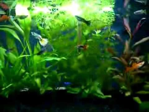 Tropical Fish Tank 54l With Guppies Platies Neon Tetras Corydoras