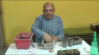 How to Propagate Marigold Seeds : Planting & Gardening Vegetables/Flowers(URDU/HINDI) 3/9/2016