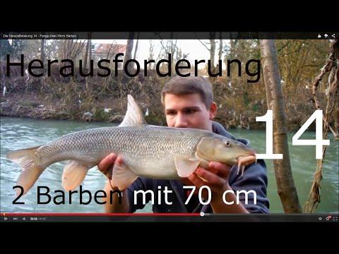 Die Herausforderung 14 - Fange zwei 70cm Barben
