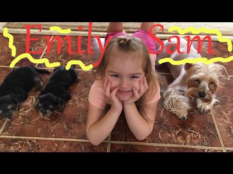 Эмили рассказывает про щенков. ВЛОГ Эми и собаки