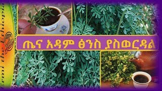 Rue Herb Health Benefits
