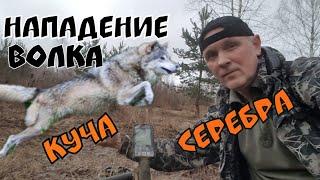 Эквинокс 800. Нападение волка и куча серебра.Коп 2019