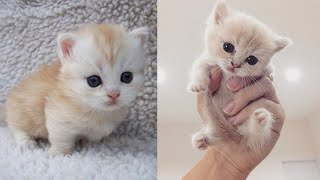 Baby Cats - Funny and Cute Cat Videos Compilation 2019