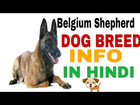 Belgium Shepherd dog facts in hindi
