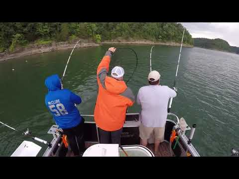 Striper Mafia Guide Service Lake Cumberland Striper Fishing McClure