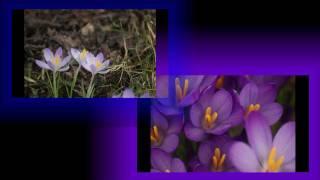 Printemps en fleurs entre Vosges et Jura en HD