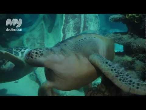 Sea Life London Aquarium - London