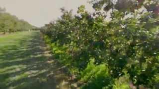 King Orchards Apple U-Pick