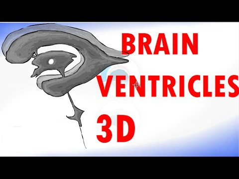 Brain Ventricles - Ventricular System of the Brain - Cerebrospinal Fluid