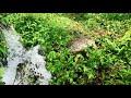 Suara Gemericik Air Sungai Asli Alami Bikin Tidur Pulas Dan Nyaman Serasa Relaksasi  Mp3 - Mp4 Download