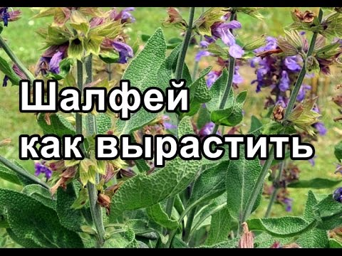 Здравница травника Гордеева .