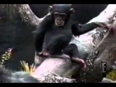 Monkey smells finger and passes out