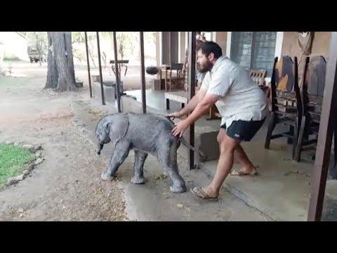Kind-Heart Man Helps Baby Elephant