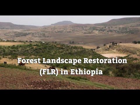 Forest Landscape Restoration (FLR) in Ethiopia