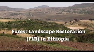Forest Landscape Restoration (FLR) in Ethiopia