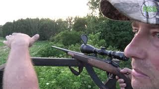 Szybkie polowanie z lisem i dzikiem