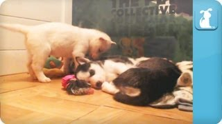 Puppy Can't Sleep, Wanna Play?