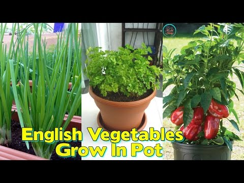 Top 10 English Vegetables To Grow In Pot