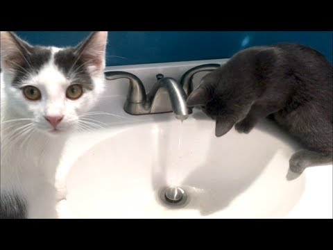 Kittens Playing In The Water & An Honest Conversation About Luna And Hope