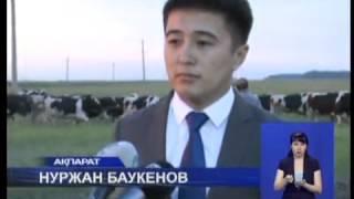 100 голов черно-пестрой породы коров завезли в село «Большая Малышка» Кызылжарского района