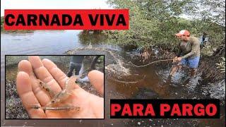 Así es como se captura la mejor CARNADA para pescar PARGOS