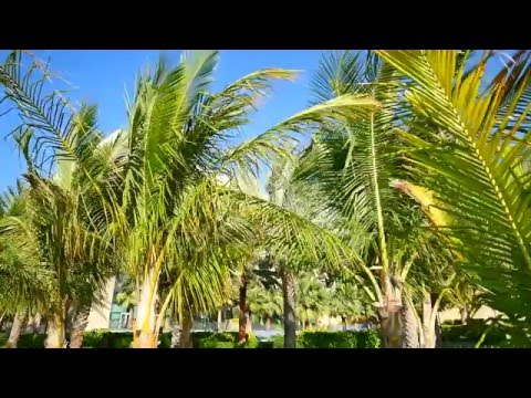 Rixos The Palm Dubai - Brand Video - key messages