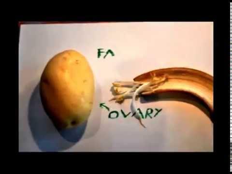 Anatomical Pathology with Fruit and Veg