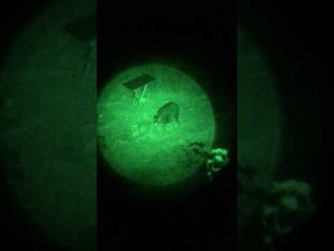 Nachtsichtgerät im Jagdalltag - Wildschweine bei völliger Dunkelheit gefilmt