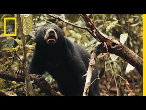 This Little Sun Bear's World Is a Scary Place | Short Film Showcase