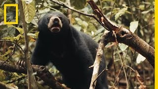 See Why This Little Sun Bear's World Is a Scary Place | Short Film Showcase thumbnail