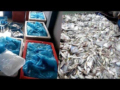 Fishy story: No, viral videos not from Penang
