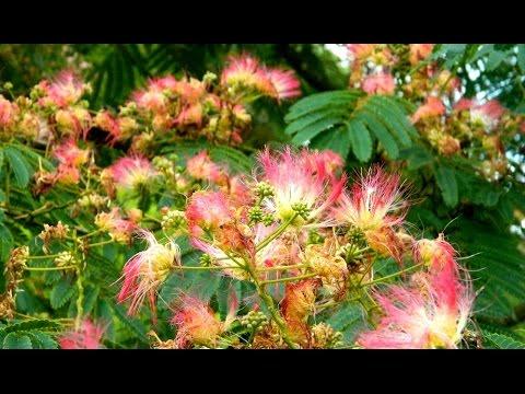 French Garden Visit - Parc Floral de Haute Bretagne, Brittany